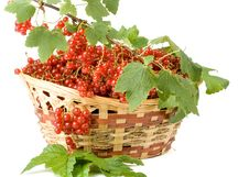 Free Red Currant Stock Photo - 6514580