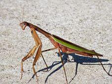 Free Alien Bug Royalty Free Stock Image - 6514986