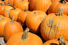 Free Pumpkins Royalty Free Stock Photos - 6515038