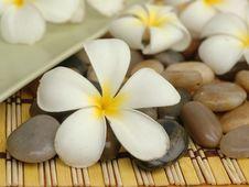 White Plumeria And Stones Royalty Free Stock Photo