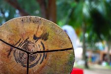 Free Tree Trunk Chair Royalty Free Stock Image - 6515866