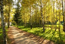 Free Autumn Yellow Alley. Royalty Free Stock Images - 6516549