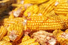 Gold Corn Royalty Free Stock Photos