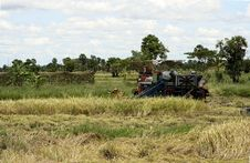Free Paddy Harvesting Machine Royalty Free Stock Image - 6517946