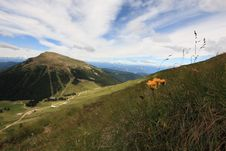 Free Italian Dolomite Royalty Free Stock Images - 6518609