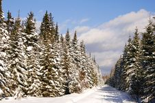 Free Winter S Path Stock Photography - 6518882
