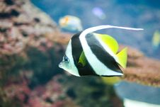 Free Colorful Tropical Fish Stock Photography - 6519162