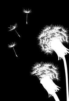 Free Two White Dandelions Stock Photo - 6519340