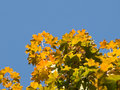 Free Autumn Maple Leaves Stock Images - 6522664