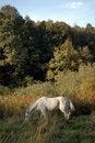 Free Gray Horse Stock Photos - 6523693