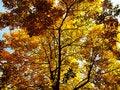 Free Autumn 01 Royalty Free Stock Image - 6524846