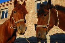 Free Horses Stock Photos - 6520043