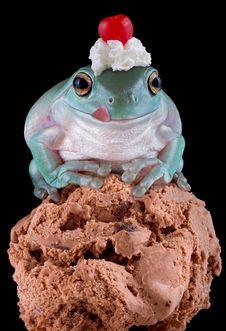 Frog Ala Mode Stock Photos