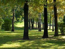Free Autumn Forest Royalty Free Stock Photos - 6521398