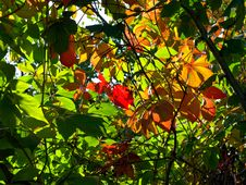 Free Autumn Leaves Stock Image - 6521541