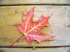 Red Leave Royalty Free Stock Photos