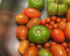 Free Garden Tomatoes Stock Photography - 6523322
