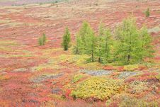 Free Autumnal Mountain Tundra Royalty Free Stock Photography - 6523537