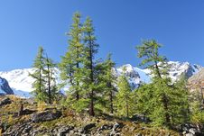 Free Mountain Peaks And Larch Forest Stock Image - 6523611