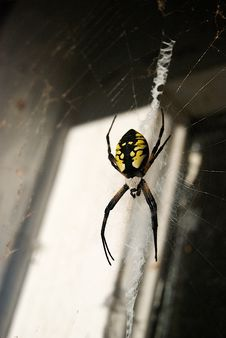 Free Writing Spider In Old Doorway Stock Image - 6523691