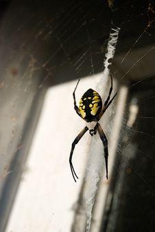 Writing Spider In Old Doorway Stock Image