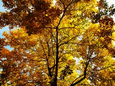 Free Autumn 01 Royalty Free Stock Image - 6524846