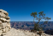 Free Tree In Grand Canyon Royalty Free Stock Images - 6524999