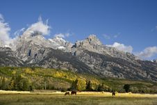 Free Grand Teton National Park Stock Photos - 6526133