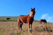 Free Horses Stock Image - 6526921