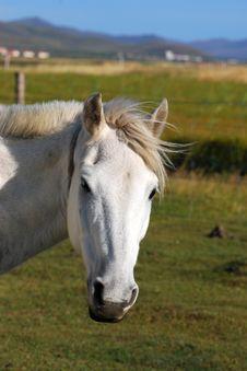 Free White Horse Stock Images - 6526934