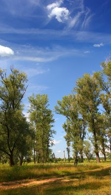 Free Summer Landscape With Poplar Trees Royalty Free Stock Image - 6527606