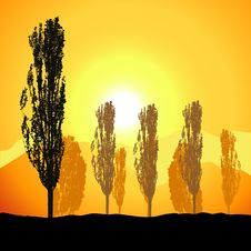 Free Tree Silhouette, Landscape Royalty Free Stock Photography - 6527707