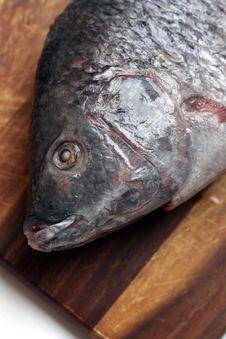 Free Fish Close-up Royalty Free Stock Image - 6528016