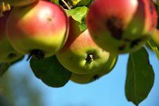 Free Apple 3 Stock Photography - 6529292