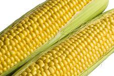 Corn-cobs Royalty Free Stock Photos