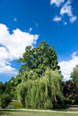 Free Beneath Weeping Willows On Bank Stock Images - 6532004