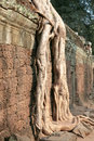 Free Roots In Ta Prohm Royalty Free Stock Photos - 6532658