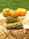 Free Thanksgiving Scene Stock Photos - 6535473