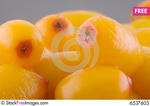 Free Sea-buckthorn Royalty Free Stock Photo - 6537605