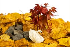 Free Autumn Swan Stock Image - 6530031