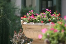 Flower-bed Stock Photo