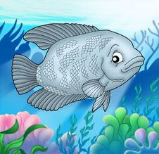 Free Big Gurama Fish Royalty Free Stock Image - 6530846