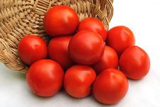Free Tomato Royalty Free Stock Images - 6531829
