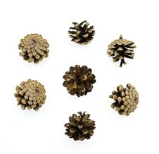 Free Pine Cones Royalty Free Stock Photo - 6531835