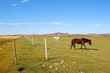 Free Horses On Pasture Stock Photos - 6531933