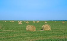 Ball Of Corn Straw In A Field Royalty Free Stock Images
