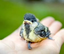 Free Sparrow Posing On A Palm Stock Photos - 6532493