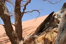Free Trees And Dunes, Namibia Stock Images - 6532564