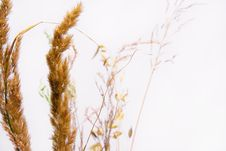 Free Dry Decorative Grass Stock Photos - 6532723