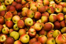 Free Apple Harvest Royalty Free Stock Photography - 6532827